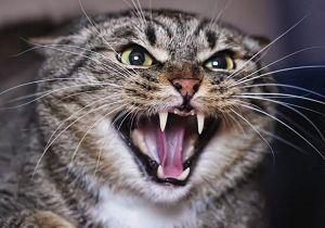 Gants pour chat agressif
